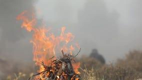 Hombre por el fuego Hoguera en el bosque almacen de metraje de vídeo