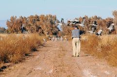 Hombre por las grúas en vuelo Foto de archivo