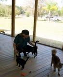 Hombre que acaricia gatos en el refugio para animales Imagenes de archivo
