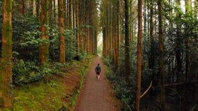 Hombre que activa en un camino en el bosque 4k almacen de video