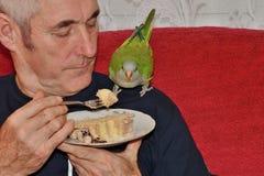 Hombre que alimenta el loro verde como el miembro de la familia con el amor animal Imágenes de archivo libres de regalías
