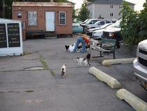 Hombre que alimenta gatos perdidos foto de archivo