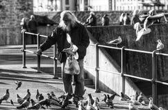 Hombre que alimenta las palomas Foto de archivo libre de regalías