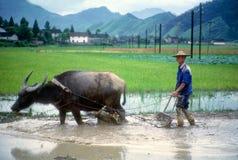 Hombre que ara con el búfalo en arroz de arroz Imágenes de archivo libres de regalías