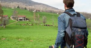 Hombre que camina al rebaño de vacas que busca las fotos Siguiente detrás Varón adulto de la gente del backpacker milenario real  metrajes