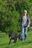 Hombre que camina con sus perros Imágenes de archivo libres de regalías