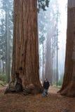 Hombre que camina en un bosque gigante fotos de archivo libres de regalías