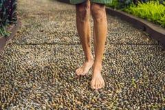 Hombre que camina en un pavimento de adoquín texturizado, Reflexology Guijarro s Fotos de archivo