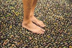 Hombre que camina en un pavimento de adoquín texturizado, Reflexology Guijarro s Fotografía de archivo libre de regalías