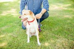 Hombre que camina su perro en un parque fotografía de archivo libre de regalías