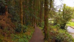 Hombre que completa un ciclo en un camino en el bosque 4k metrajes