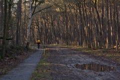 Hombre que completa un ciclo en el bosque Imagenes de archivo