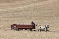 Hombre que conduce el carro traído por caballo Fotografía de archivo libre de regalías