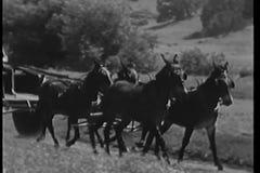 Hombre que conduce el carro traído por caballo en la carretera nacional metrajes