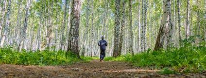 Hombre que corre en arboleda del abedul Foto de archivo libre de regalías
