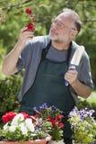 Hombre que cultiva un huerto al aire libre Imágenes de archivo libres de regalías