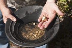 Hombre que encuentra pepitas de oro Fotos de archivo libres de regalías
