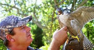 Hombre que entrena a un águila del halcón almacen de metraje de vídeo