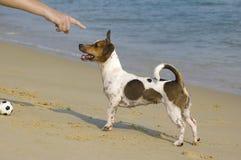 Hombre que entrena a un perrito en una playa Imagen de archivo libre de regalías