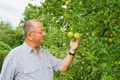 Hombre que examina una manzana Fotos de archivo