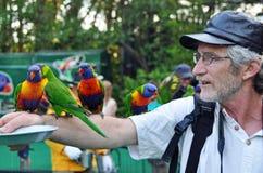 Hombre que introduce el arco iris australiano salvaje Lorikeets Imagen de archivo libre de regalías