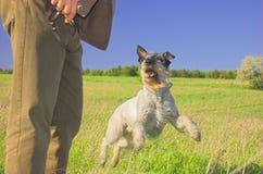 Hombre que juega con el perro Foto de archivo libre de regalías