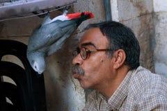 Hombre que juega con su loro. imagen de archivo