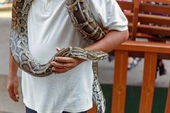 Hombre que maneja una serpiente para una demostración imagen de archivo