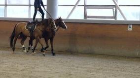 Hombre que monta dos caballos Montar a caballo derecho con el caballo dos metrajes