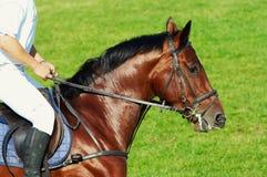 Hombre que monta un caballo Imagenes de archivo