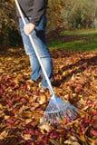 Hombre que rastrilla las hojas de otoño Imagenes de archivo