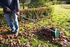 Hombre que rastrilla las hojas en el jardín Imagen de archivo