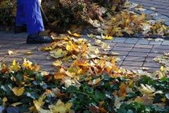 Hombre que rastrilla las hojas en el jardín Imagen de archivo libre de regalías