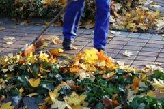Hombre que rastrilla las hojas en el jardín Imágenes de archivo libres de regalías