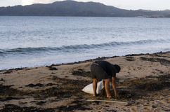 Hombre que recoge alga marina Imagen de archivo