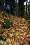 Hombre que recorre en hojas. fotografía de archivo libre de regalías