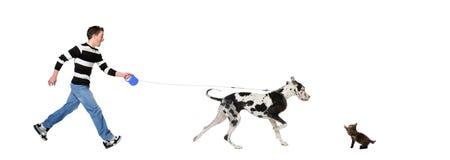 Hombre que recorre su perro (gran danés 4 años) Imágenes de archivo libres de regalías