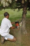 Hombre que reduce un árbol Fotos de archivo libres de regalías