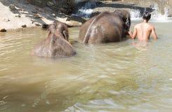 hombre que se baña con el elefante asiático Foto de archivo