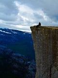 Hombre que se sienta en la roca Preikestolen Noruega del púlpito Fotografía de archivo libre de regalías