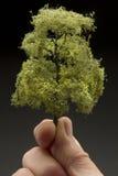 Hombre que sostiene un árbol Foto de archivo libre de regalías