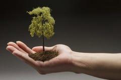 Hombre que sostiene un árbol disponible Fotos de archivo libres de regalías