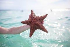 Hombre que sostiene una estrella de mar Fotografía de archivo libre de regalías