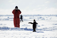 Hombre que toma cuadros del pingüino Fotos de archivo