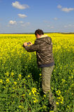 Hombre que toma imágenes en campos de flores amarillos Fotos de archivo