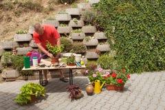 Hombre que trabaja en jardín El jardinero compensa las flores Foto de archivo libre de regalías