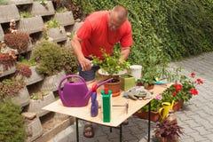 Hombre que trabaja en jardín El jardinero compensa las flores Fotografía de archivo