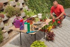 Hombre que trabaja en jardín El jardinero compensa las flores Foto de archivo
