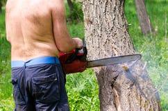 Hombre que usa una motosierra para caer un árbol Fotografía de archivo