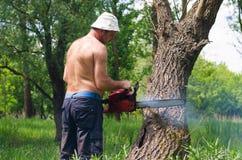 Hombre que usa una motosierra para caer un árbol Fotos de archivo libres de regalías